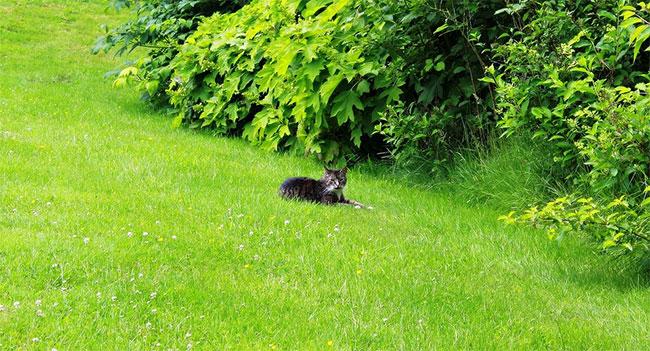 tagliare-erba-giardino-grande